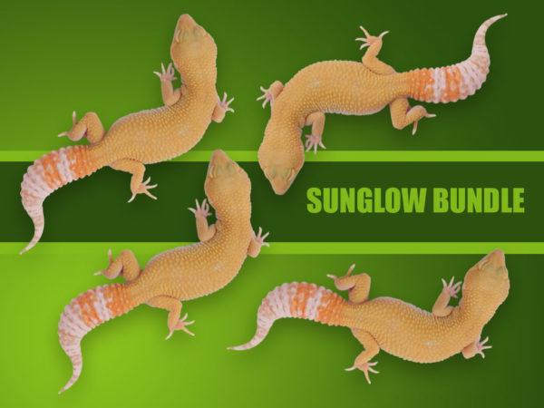 SUNGLOW_BUNDLES